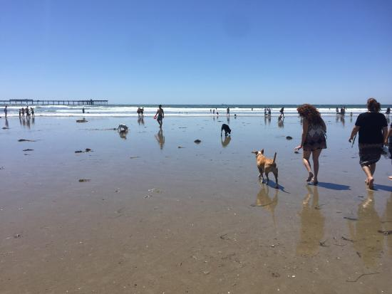 awesome day with my friends and their dog owen while visiting san rh tripadvisor com ph beaches in san diego with a pier