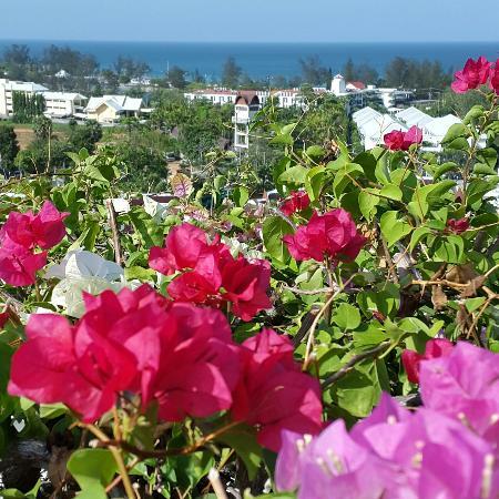 Pacific Club Resort: IMG_20160416_222411_large.jpg