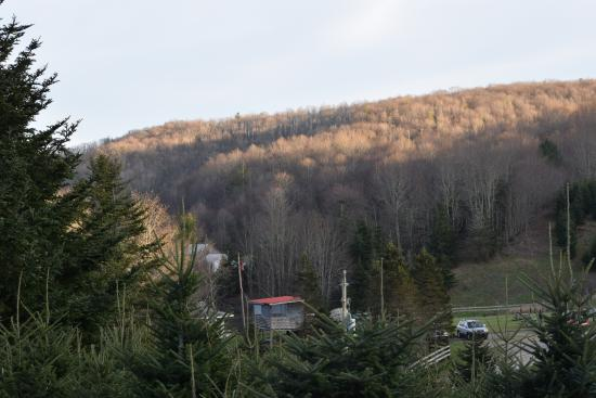 Whitetop, VA: View from our site T11