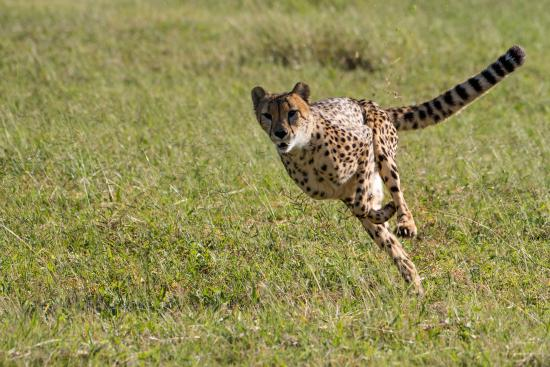 De Wildt Shingwedzi Cheetah Ranch