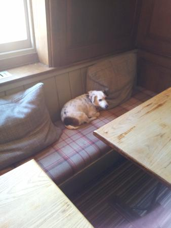 Cranborne, UK: Dog friendly pub