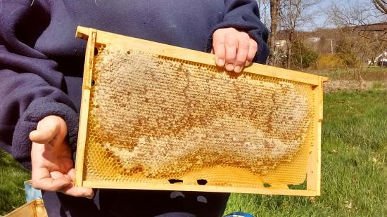Honey Brook, PA: Ethically harvesting fresh, local honey.