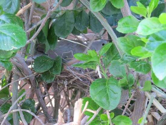 Mountain Valley Lodge & RV Park: Nesting Dove 4/14/16