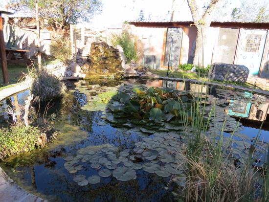 Mountain Valley Lodge & RV Park: Frogs included in the courtyard pond---- 4/14/16