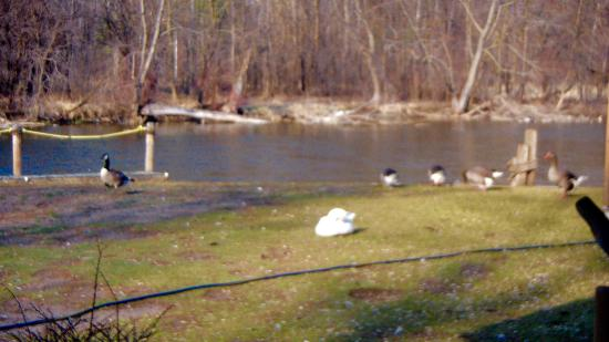 Waite Park, MN: Ducks and geese from dining room window