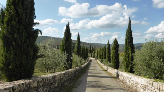 Castello di Meleto: Zufahrt zu den Ferienappartments