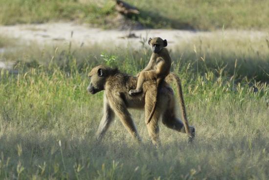 Foto de Wilderness Safaris DumaTau Camp