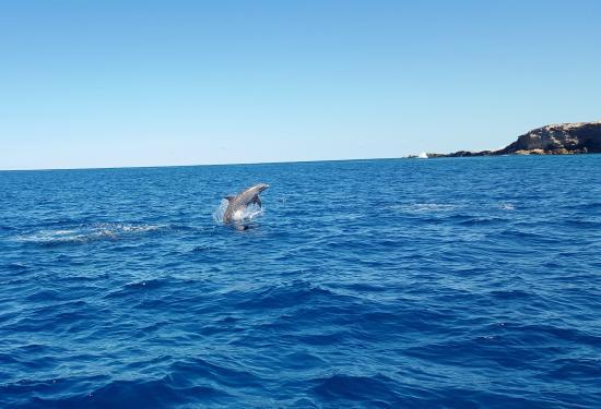 Keloa Charter Private Boat Trip: Les dauphins font un shows