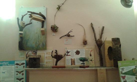 Alfonsine, İtalya: Sala al piano terra