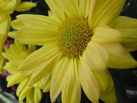 Pasuruan, إندونيسيا: ini juga... namanya bunga apa hayo? sahabat ada yg tahu nggak?