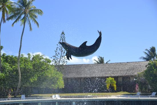 Moorea, French Polynesia: Figures aériennes