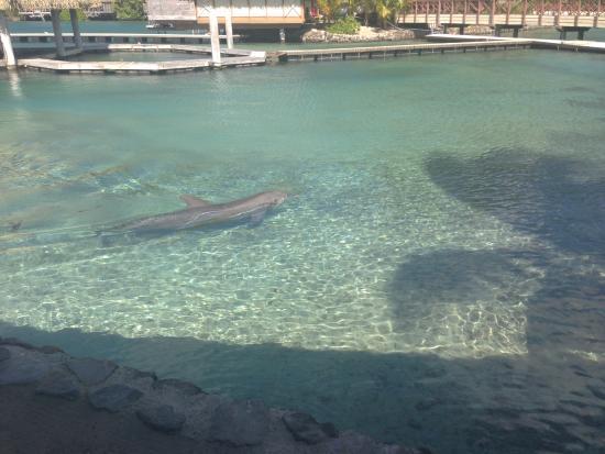Moorea, French Polynesia: un des bassins