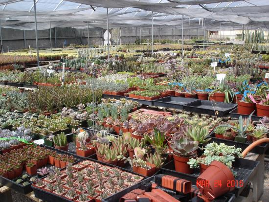 Bach S Greenhouse And Cactus Nursery Inside One Of The Greenhouses