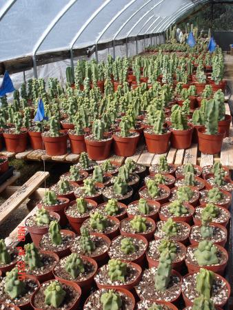 Bach's Greenhouse and Cactus Nursery