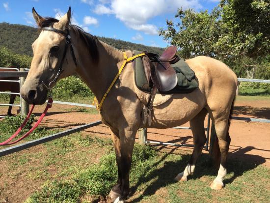 Gatton, Australia: Bandit awesome horse!