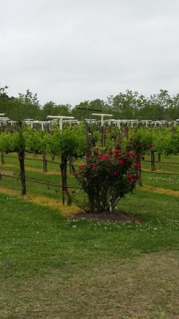 Santa Fe, Τέξας: Vineyard