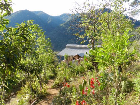 Armonia Ambiental: Dining srea