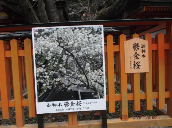 Kanazakura Shrine Photo