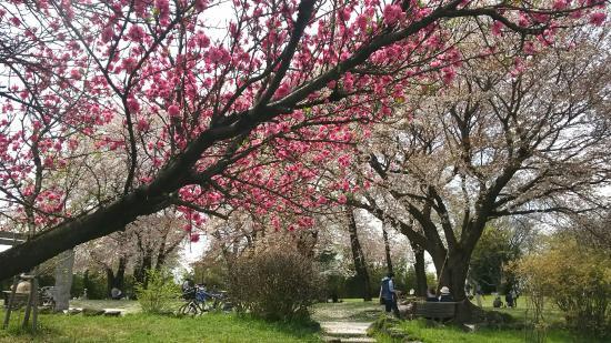 Nakagawa Hachimanyama Park