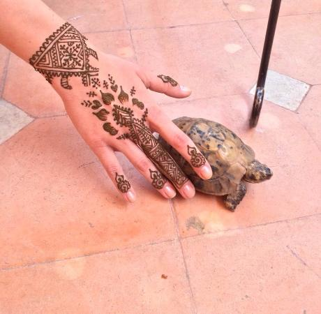 Henna Tattoo And New Little Friend Picture Of Marrakech Henna Art