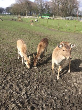 Bolton, UK: Best open farm visit ever!