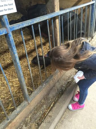 Bolton, UK: Numerous selection of animals making a fantastic day out.