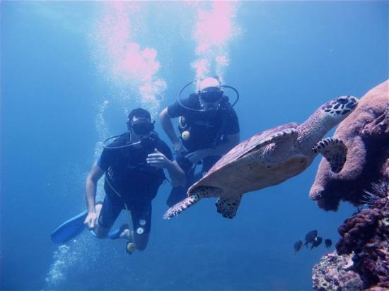普吉潜水游