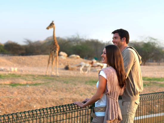 Abu Dhabi, United Arab Emirates: Couple at Al Ain Zoo