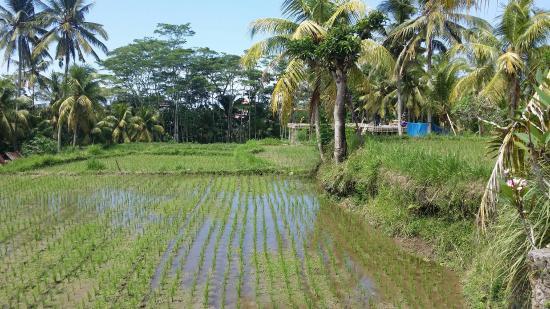 Ubud Sari Health Resort: 20160330_110442_large.jpg