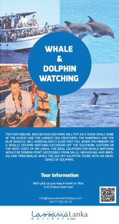 Bentota, Sri Lanka: WHALE  &  DOLPHIN  WATCHING