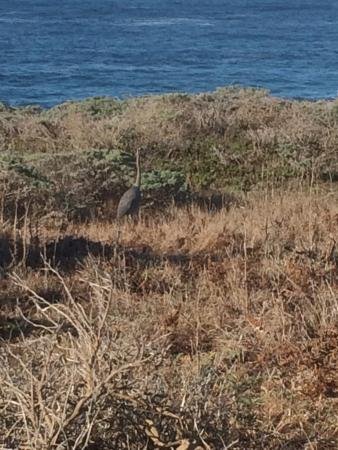 The Sea Ranch, Kalifornia: There's a large bird in this photo! Look close.