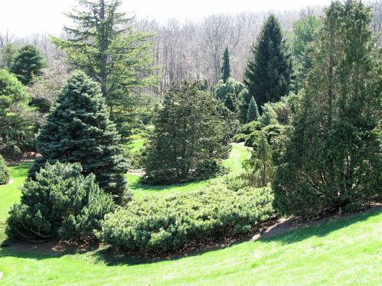 Tipton, MI: More evergreen trees