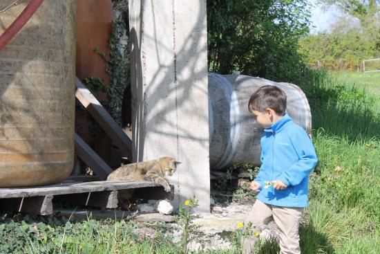 Saussignac, Francia: Lea the cat