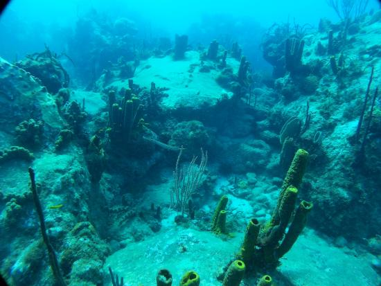 Vieux-Habitants, กวาเดอลูป: Fond sous-marin.
