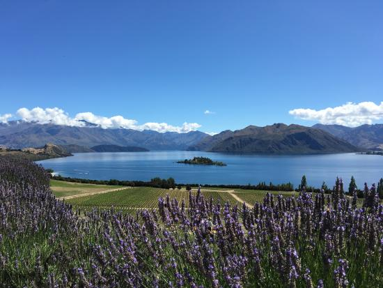 ‪Queenstown Tours‬