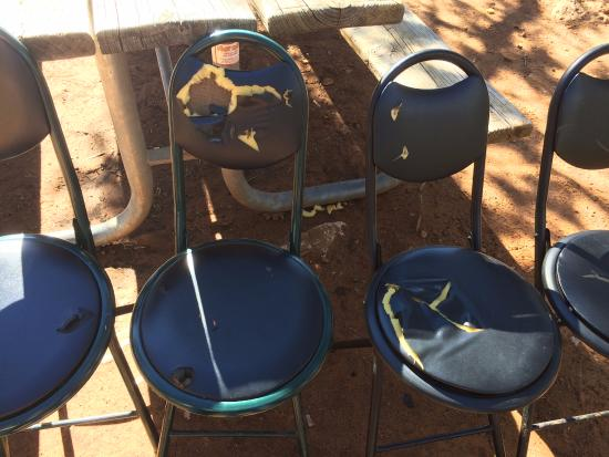 watch out for the ravens they ripped up our chairs picture of rh tripadvisor com