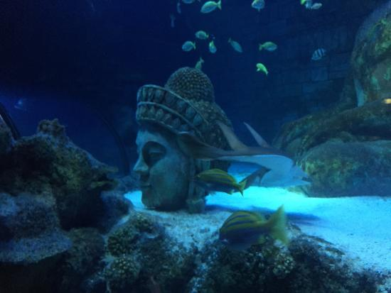 photo0.jpg - Picture of Lido di Jesolo Sea Life Aquarium ...