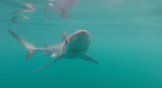 Holyrood, Canadá: Encounter sharks.