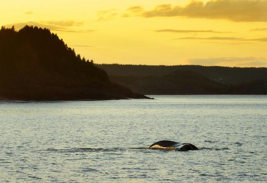 Holyrood, แคนาดา: Watch whales at sunset.