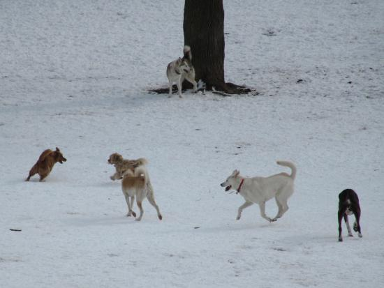 Trinity Bellwoods Park : The pack