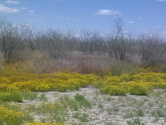 Rio Bosque Wetlands Park
