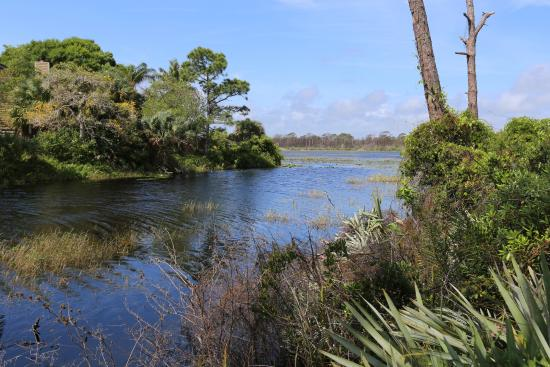 Port Saint Lucie, FL: Canal cut to Marshes