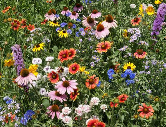 Honey Brook, PA: Scattered patches of wildflowers provide the bees with natural habitat.