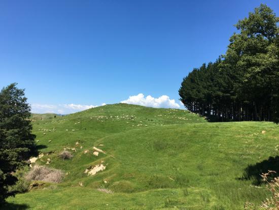 Stratford, Nueva Zelanda: По пути, здесь утроили привал