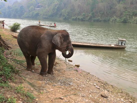 Ban Xieng Lom, Laos: Maxy