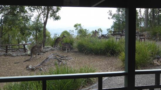 Vacy, Australië: This is what we woke up to