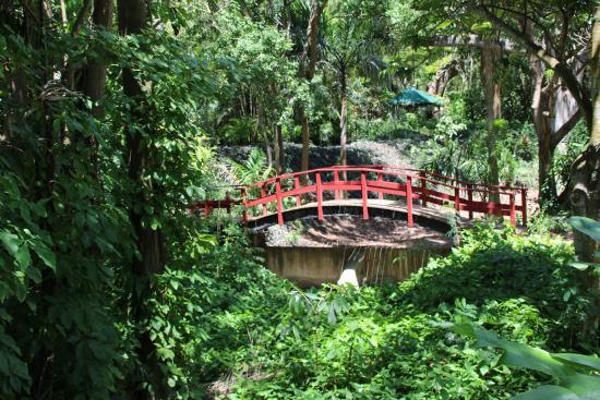 Sweeny's St. Croix Safari Tours: Bridge in the gardens