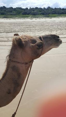 Port Macquarie Camel Safari's