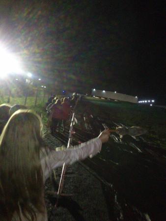 Tortuguitas, الأرجنتين: Camino al estacionamiento de Directv Arena, al fondo donde se ven una luces
