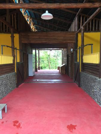 Sarapiqui, Costa Rica: The stables